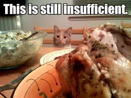 thanksgiving lolcat keywords and pictures
