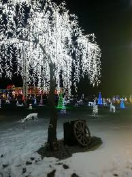 sparkle and shine at leduc country lights