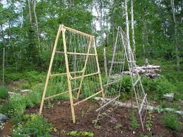 niki jabbour the year round veggie gardener a frame trellises an old photo of some of my first a frame trellises simple but effective takes about an hour to make one