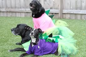 diy dinosaur halloween costume the diy dog mom