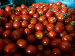 How To Get Usda Certified Organic U0027 Alternatives Many Small Direct Sale Farmers Forgo