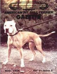 colby american pitbull terrier gr ch mayday rom grand champions pinterest