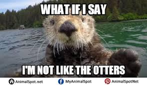 Sea Otter Meme - otter memes