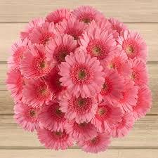 80 stem gerbera daisies