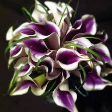 picasso calla 7 best picasso calla weddings images on wedding