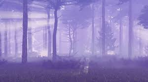 magic halloween background motion through thick fog in a spooky pine forest at dusk or misty