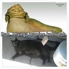Jabba The Hutt Meme - fat cat jabba the hutt meme funny stuff pinterest meme