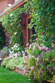 12530 best flowers and gardens images on pinterest flowers