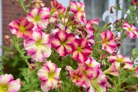 Maryland Pink And Green Wordless 15 Container Ideas And Why I Love Them U2013 Toronto Gardens