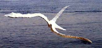 birds in flight birds flying sculptures or statues sculptures