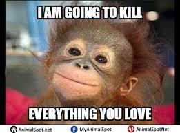 Ape Meme - monkey memes