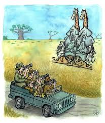 safari cartoon photo safari by vladan nature cartoon toonpool