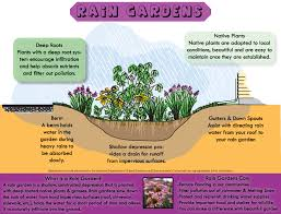 native plants for rain gardens the township of haverford pennsylvania environmental advisory