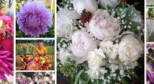 farm fresh flowers fresh flowers boxx berry farm