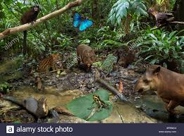 Amazon Rainforest Map South American Rainforest Stock Photos U0026 South American Rainforest