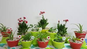 cute plant diy cute n little indoor plants