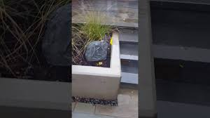 Outdoor Home Audio Systems Custom Home Outdoor Audio System W Buried Subwoofer Youtube