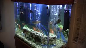 Uv L Aquarium Algae Bloom Is The Secret To Get Rid Of Green Algae Water I