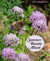 Plants That Repel Aphids by Summer Beauty Allium Flowers
