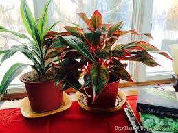 how to grow houseplants indoors hgtv