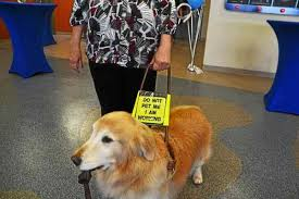 Leader Dogs For The Blind Rochester Michigan Leader Dogs For The Blind Seeks Volunteers Holds Open House In