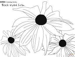 black eyed susan coloring page free printable coloring pages