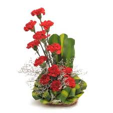 Red Carnations 12 Red Carnations Arranged In A Basket With Dracaena Leaves