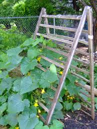 Cucumber Spacing On Trellis The Full Circle Gardener Vertical Gardening Trellis Training