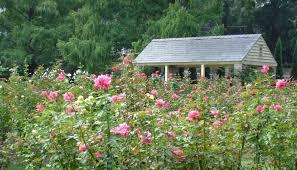 garden family a history of the raleigh rose garden raleigh little theatre