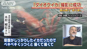 enormous giant squid surfaces in japanese harbour u2013 the sun