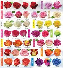 roses colors 30 diagrams to make you master in growing roses varieties