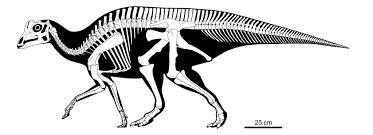 joe u0027s bones u2013 joe the dinosaur