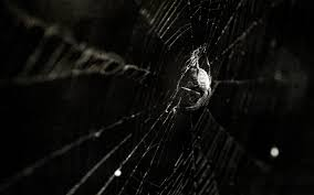 spider wallpaper and background 1440x900 id 74341