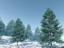 blue spruce blue spruce 3 0 img jpg