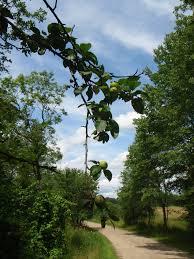 bradley pond farm preserve topsham maine