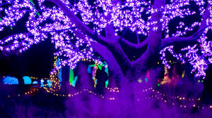 Botanical Garden Atlanta Lights 10 Best Holiday Light Displays In The United States Mommy Nearest