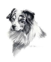australian shepherd mit 6 monaten australian shepherd dog art print signed by artist dj rogers on