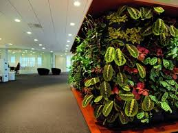 awesome indoor plants decoration idea showing giant plants