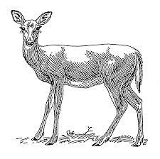file doe a deer 002 png the work of god u0027s children