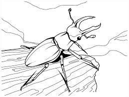 modest insects coloring pages cool ideas for y 7478 unknown