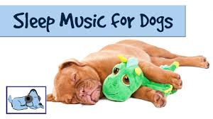 the dog song music to help your dog sleep rmd09 youtube