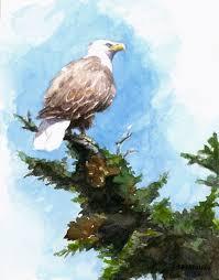 bald eagle sketch mboardman com