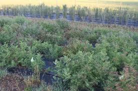 usda native plants restoration in the understory u2013 compasslive