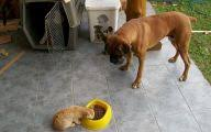 boxer dog food diet 35 free hd wallpaper dogbreedswallpapers com