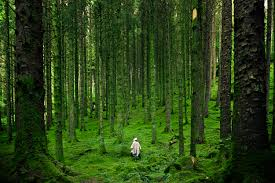 forest images The forest bathing phenomenon nature connection guide jpg