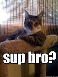Sup Meme - sup bro the most interesting cat in the world quickmeme