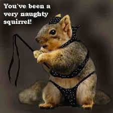 Funny Naughty Memes - 31 most funniest squirrel meme pictures and photos