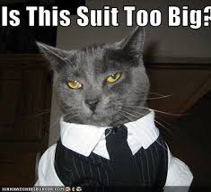 Cat Suit Meme - is this suit too big cheezburger funny memes funny pictures