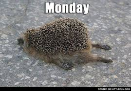 Hedgehog Meme - littlefun monday hedgehog