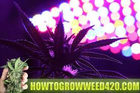 Best 25 Marijuana Grow Lights by How To Grow Weed Official Growing Elite Marijuana Download